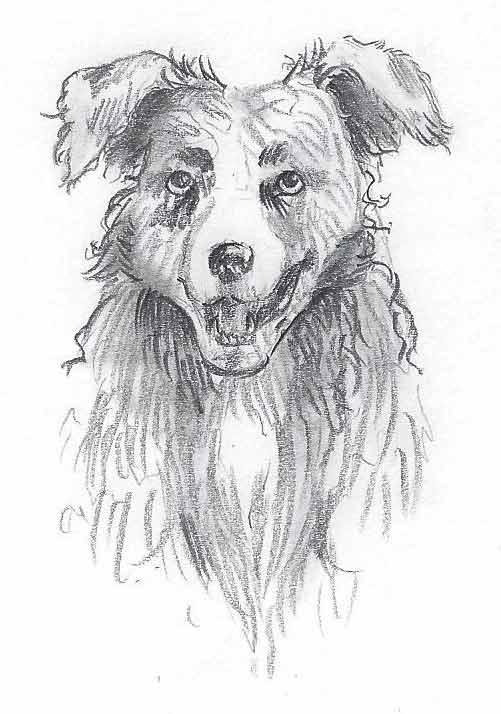 Hund zeichnen Endergebnis