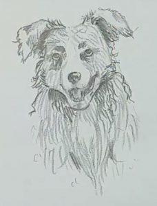 Hund zeichnen Schritt 9
