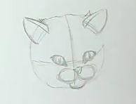 Katze zeichnen & Katze malen - Schritt 2