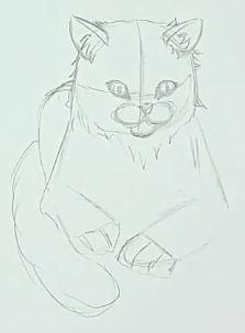 Katze malen & Katze zeichnen - Schritt 3