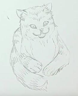Katze zeichnen & Katze malen - Schritt 4