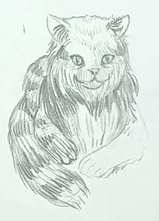 Katze malen & Katze zeichnen - Schritt 5