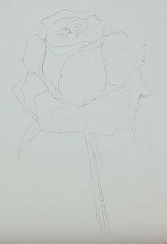 Stiel und Details der Rose zeichnen