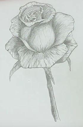 rose zeichnen schritt f r schritt tutorial zeichne. Black Bedroom Furniture Sets. Home Design Ideas