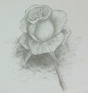 Rose Zeichnen Schritt Für Schritt Tutorial Zeichne